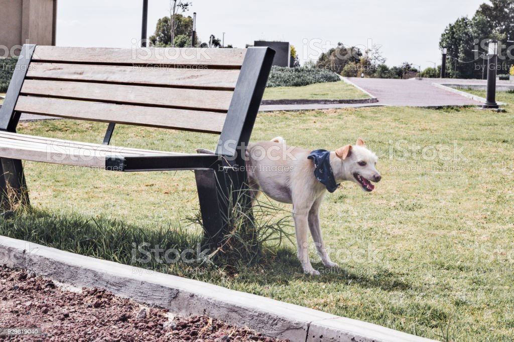 Dog pipping on a bench in the park stock photo