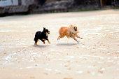 犬は、ビーチで遊ぶ