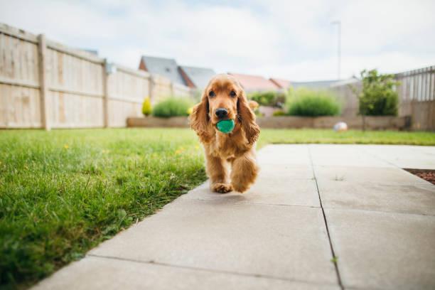 Hund spielen Fetch – Foto