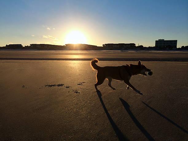 Dog playing fetch stock photo