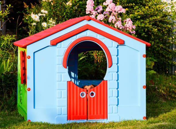 Dog playing hide and seek game at garden playground house stock photo