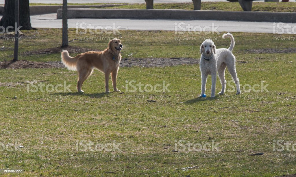 Dog playing in a park foto de stock royalty-free
