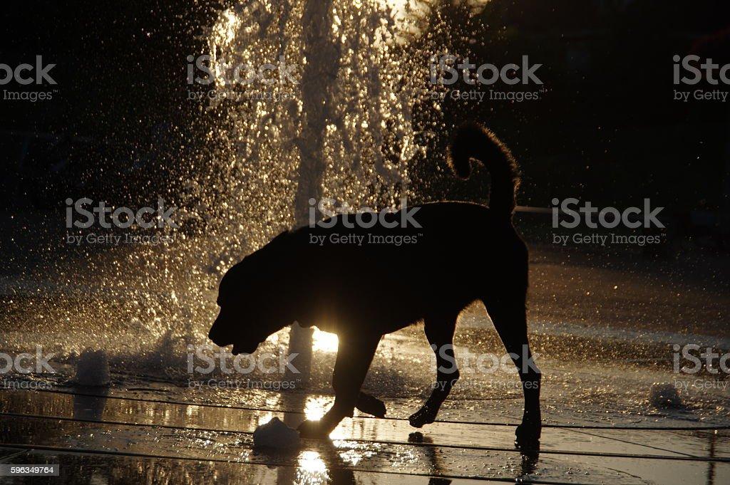 Dog playing in fountian Lizenzfreies stock-foto