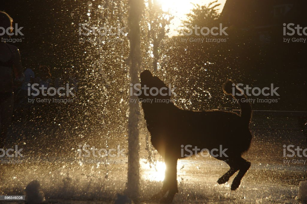 Dog playing in the city fountain royalty-free stock photo