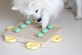 istock Dog playing Intellectual game. Training game for dogs. 1217573262