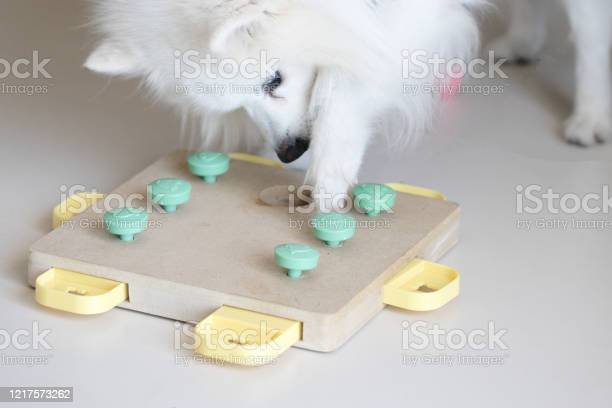 Dog playing intellectual game training game for dogs picture id1217573262?b=1&k=6&m=1217573262&s=612x612&h=cnxhgrq96sgxlss9pmwwyceczgsycvds5sxuexdhidm=