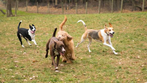 Dog playing outside picture id908830860?b=1&k=6&m=908830860&s=612x612&w=0&h=dsh3xij3u3r7x6dhkf7ysciq4 mczqyhcch3nsjlkbi=