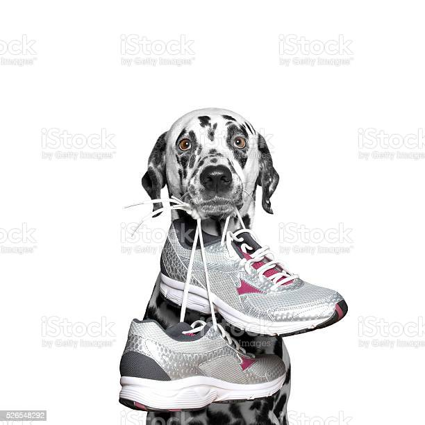 Dog playing sports running and jogging picture id526548292?b=1&k=6&m=526548292&s=612x612&h=5lbsc2nv wyc46sxtow32ibocwnrg6engbjrehblo g=