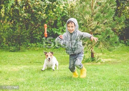 Jack Russell Terrier dog running after kid to catch pet toy
