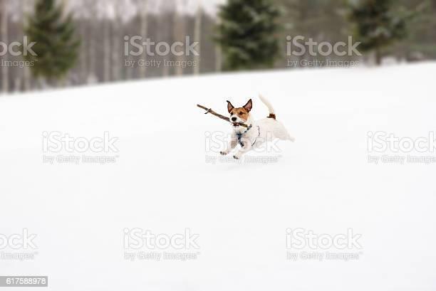 Dog playing with toy on winter snowy golf field picture id617588978?b=1&k=6&m=617588978&s=612x612&h=gsw65 dzaubrs2oj ns yjmehjmkttyqntkr a0mqa0=
