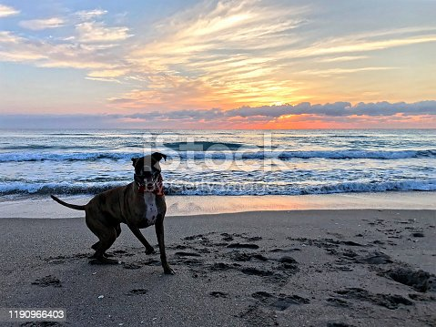 silhouette of dog running on shore in Florida
