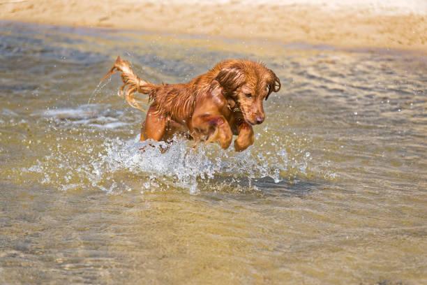 Dog plays on the beach picture id820953218?b=1&k=6&m=820953218&s=612x612&w=0&h=ig1gcspuwsfyk qev1oa5 bh izkuuhrbvwbhsgkujs=