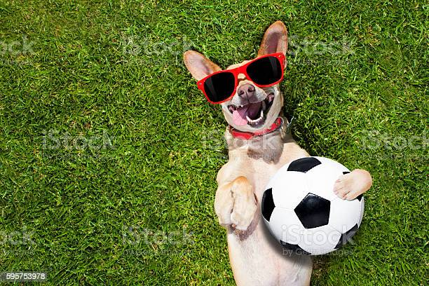 Dog plays with soccer ball picture id595753978?b=1&k=6&m=595753978&s=612x612&h=mgodnhwplgqddgytd1fd fwykpyhtsaiptw14rksxjo=