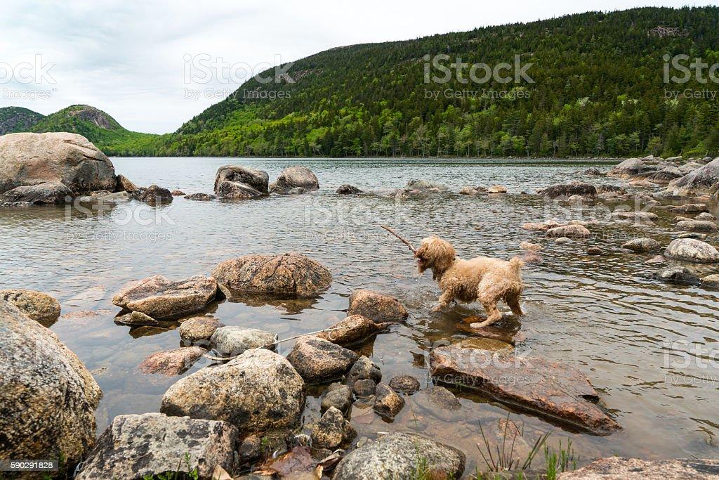 Dog Plays with Stick on Shore Стоковые фото Стоковая фотография