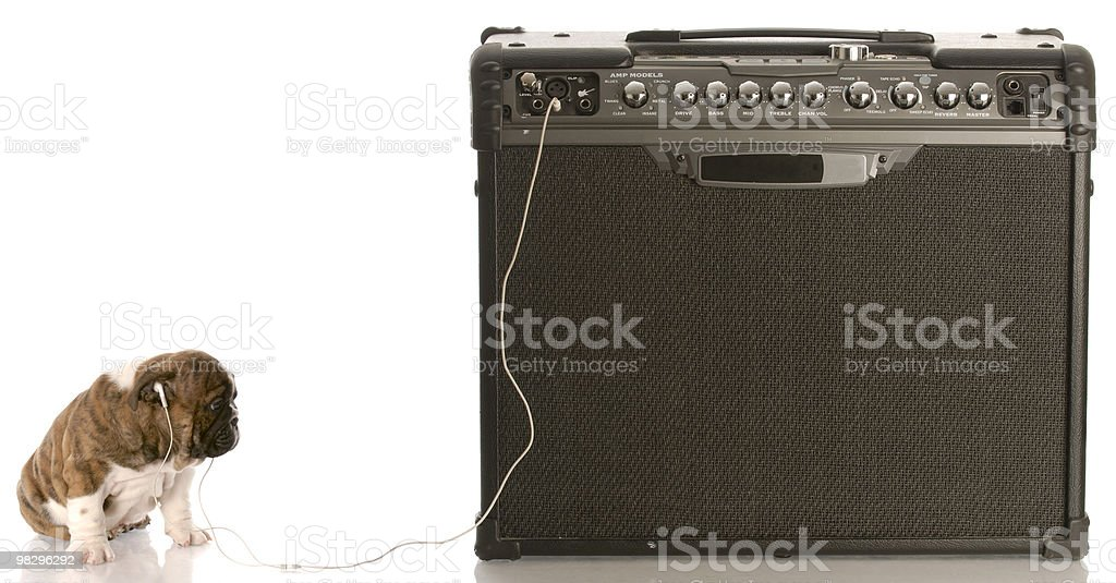 dog plugged in to music royalty-free stock photo