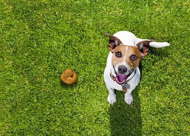 dog poop on grass in park - durchfall beim hund stock-fotos und bilder