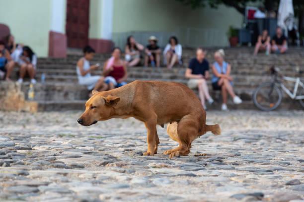 Dog Pooping