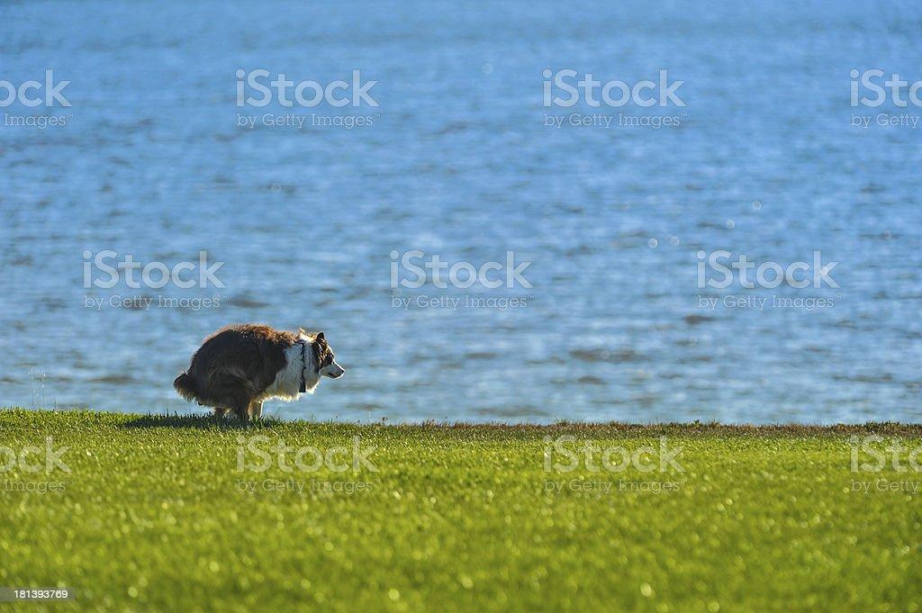 Hund poops auf Gras mit Wasser – Foto