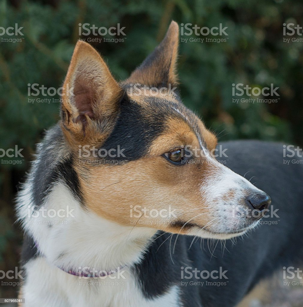 Dog portait in natural light royalty-free stock photo