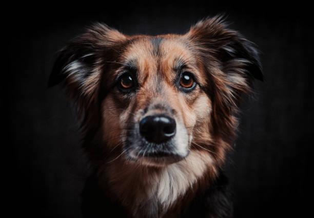 hund-portrait - hundeplätze stock-fotos und bilder