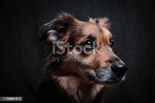 istock Dog Portrait 1129891572