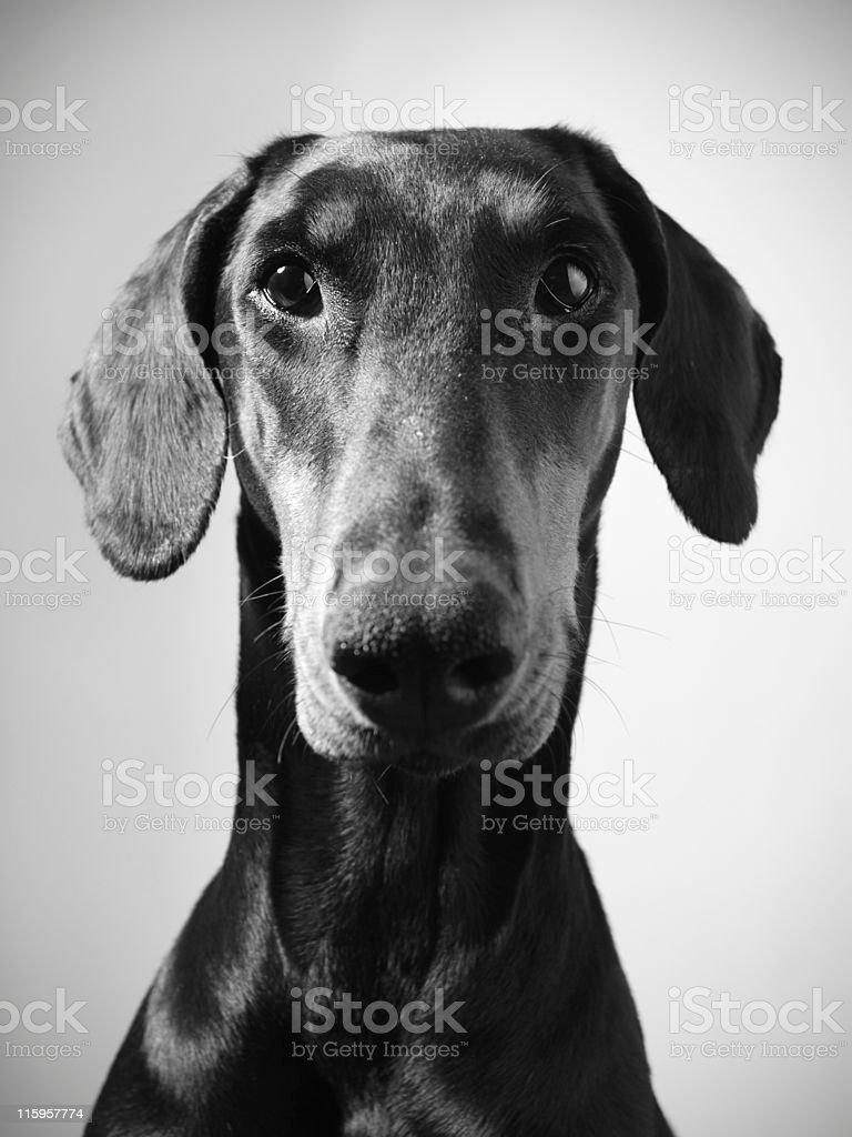 Dog portrait. stock photo