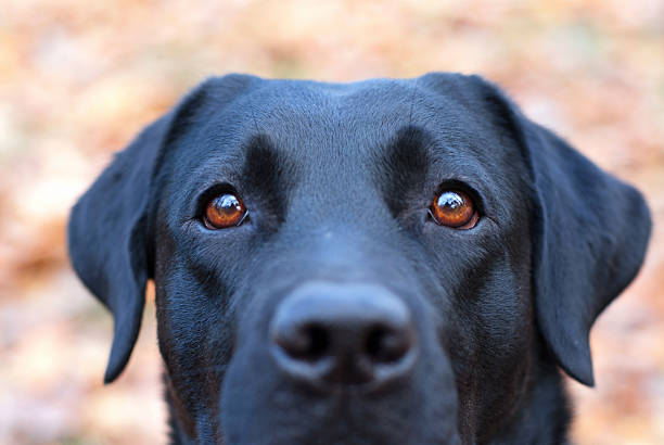 Hund portrait – Foto