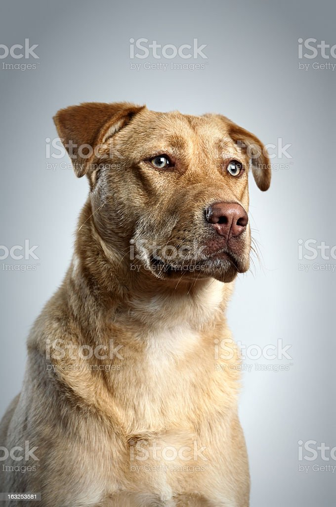 Dog Portrait stock photo