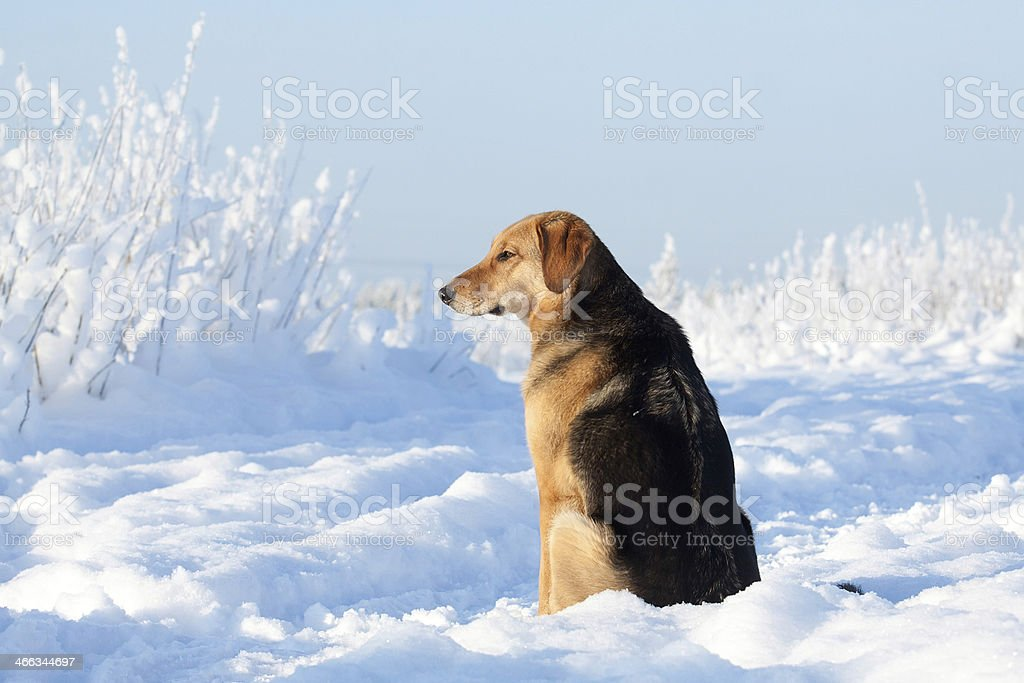 Dog portrait royalty-free stock photo