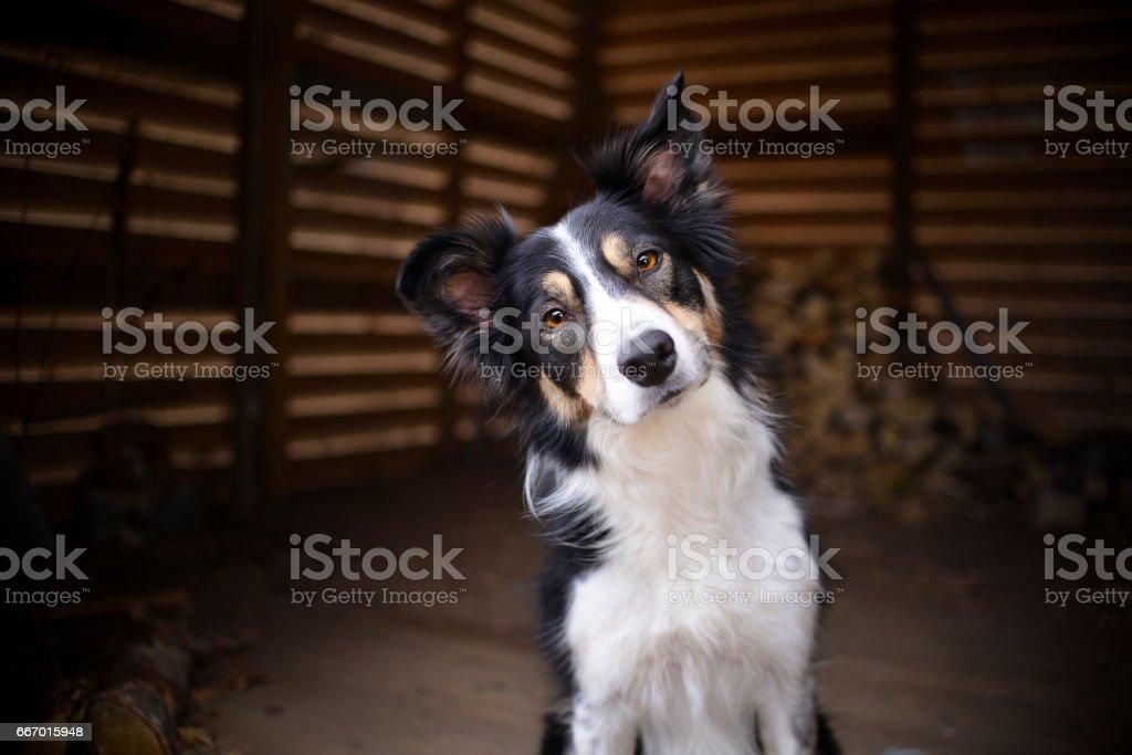 Dog portrait.