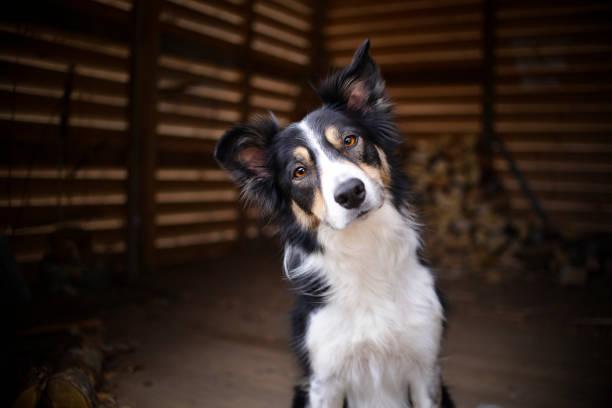 Dog portrait. - foto de stock