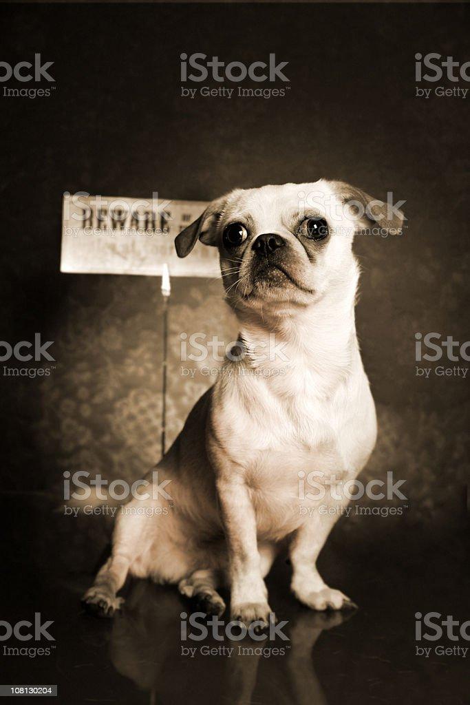 Dog portrait, Sepia royalty-free stock photo