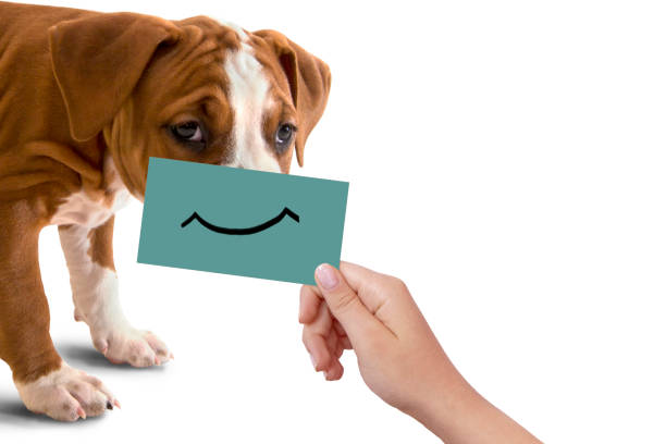 dog portrait with happy smile on cardboard, isolated on white background - sad cartoon images stock photos and pictures