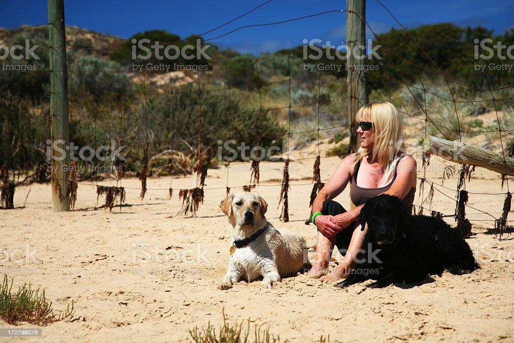 Dog portraits royalty-free stock photo