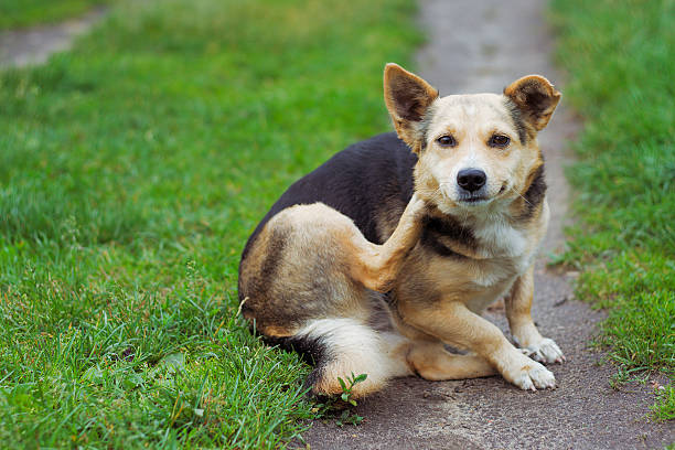 dog posing outdoors - scratching stock photos and pictures