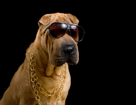 istock dog pound gangster in gold chains 177030170