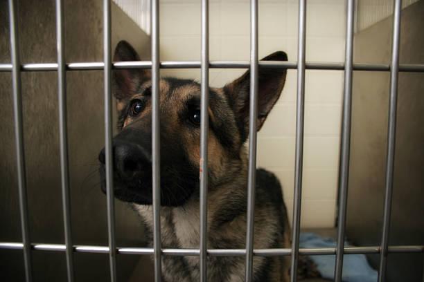 Dog Pound stock photo
