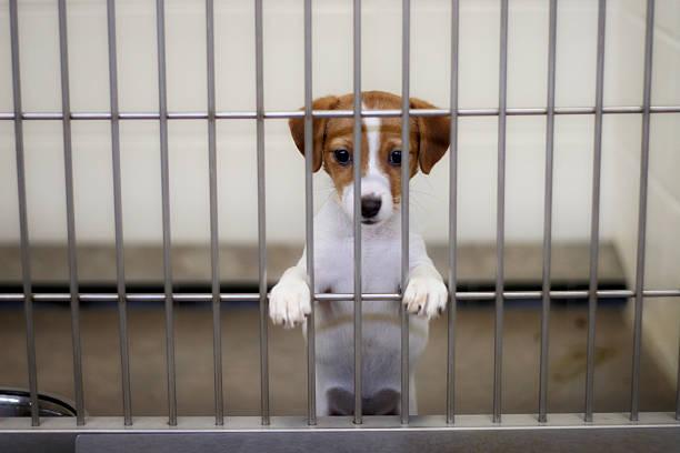 dog pound puppy - kooi stockfoto's en -beelden