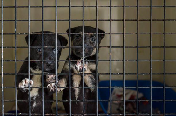 Dog pound puppy picture id536403069?b=1&k=6&m=536403069&s=612x612&w=0&h=52jnqhorv9cd68g7fldigaqw9q41c41lqya m8jc7pi=