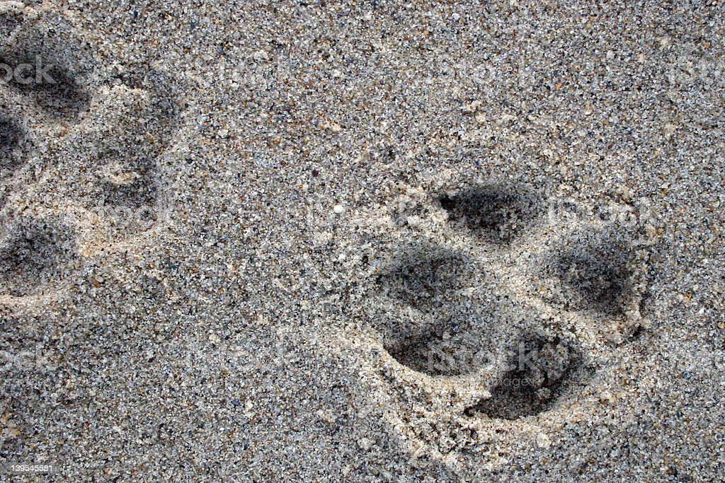 Dog Prints in the Sand royalty-free stock photo