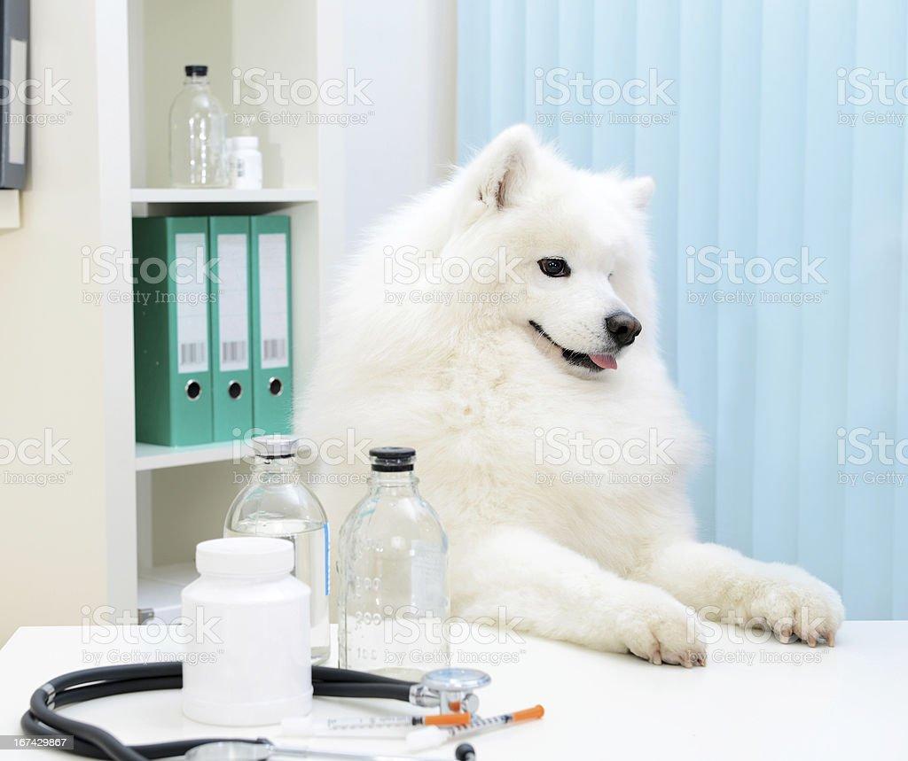 dog Professor royalty-free stock photo