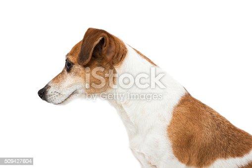 istock Dog profile face 509427604