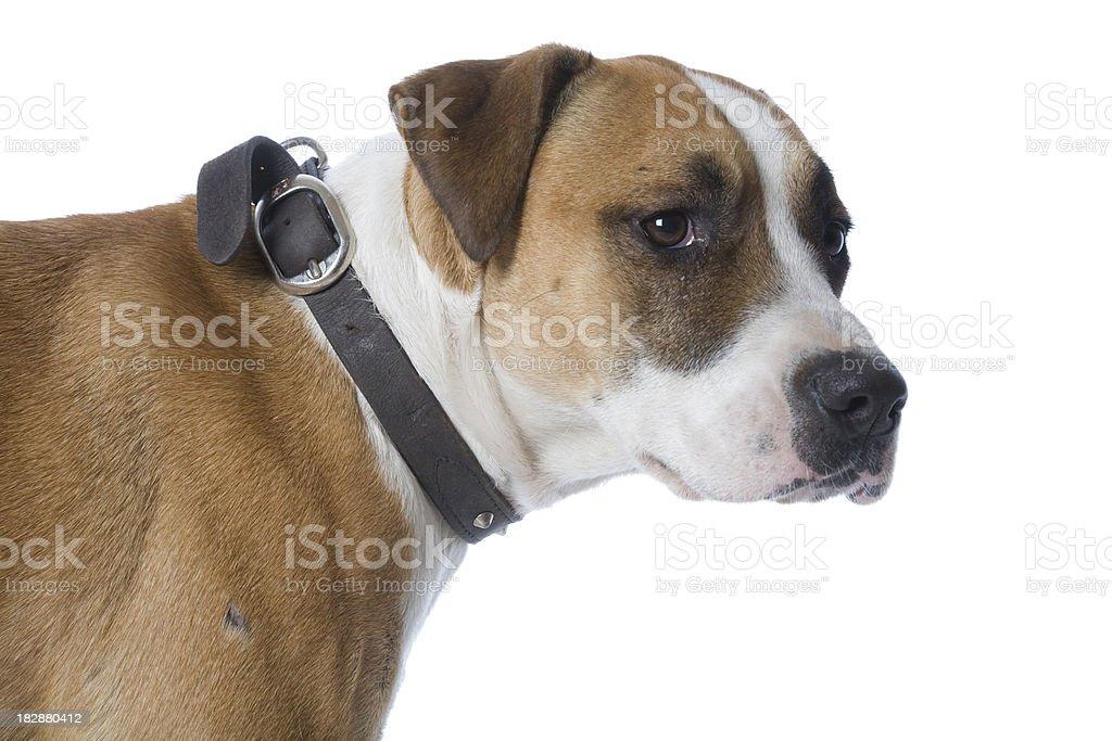 Hund Profil Lizenzfreies stock-foto