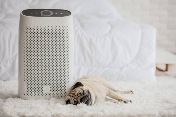 Dog Pug Breed and Air purifier in cozy white bed room for filter and cleaning removing dust PM2.5 HEPA in home,for fresh air and healthy life,Air Pollution Concept Dog Pug Breed and Air purifier in cozy white bed room for filter and cleaning removing dust PM2.5 HEPA in home,for fresh air and healthy life,Air Pollution Concept air filter stock pictures, royalty-free photos & images