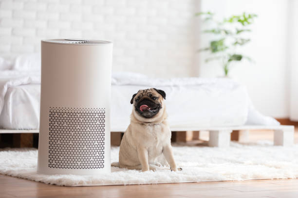 Dog pug breed and air purifier in cozy white bed room for filter and picture id1209792313?b=1&k=6&m=1209792313&s=612x612&w=0&h=1vij3ry9qyrcxmtazz7diepjmg0ipb8mdczix gfaca=