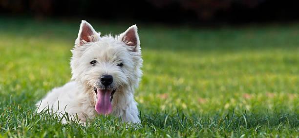 Dog puppy banner picture id609029342?b=1&k=6&m=609029342&s=612x612&w=0&h= znkyh4oxlumrpcpbtl9sd4werhgbkpbx5n 28bz30u=
