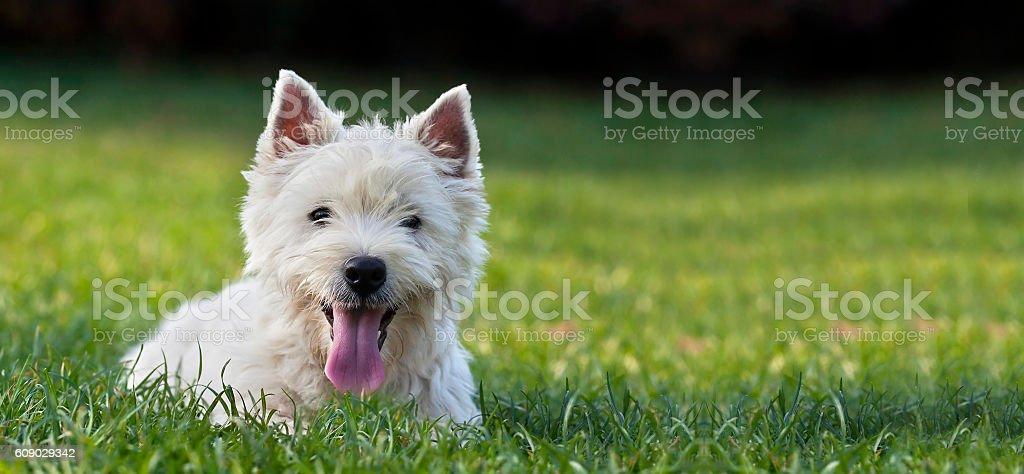 Dog puppy banner stock photo
