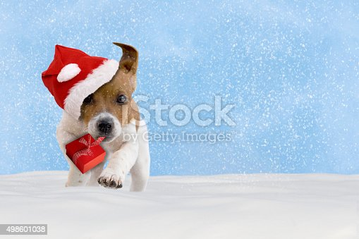 istock Dog, puppy, Jack Russel Terrier with santa hat jumping 498601038