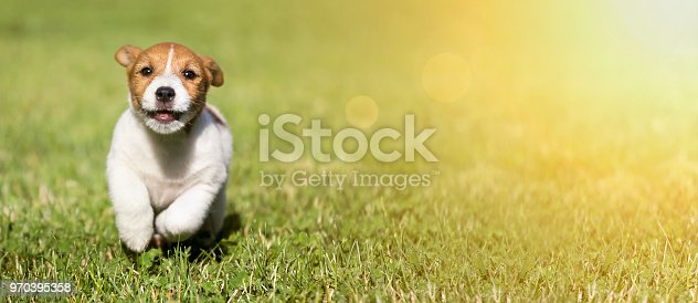 1053642922 istock photo Dog puppy playing 970395358