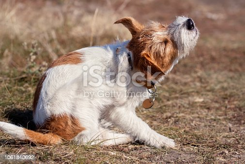 Cute furry pet dog puppy scratching in the grass